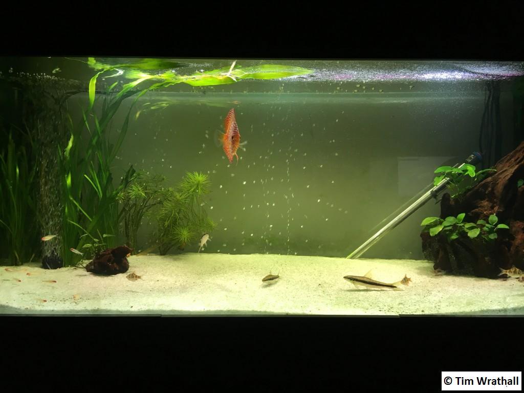Aquarium - front view