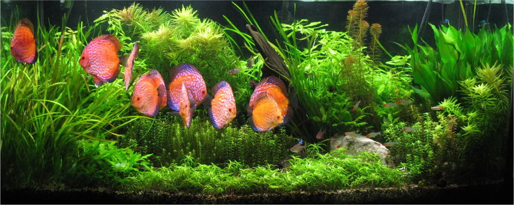 Aquascape Ideas Ardent Thoughts